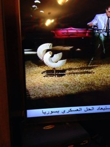 Sisi on the TV set