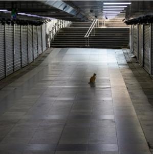 Cat alone